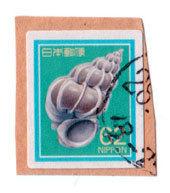 shiru62.jpg